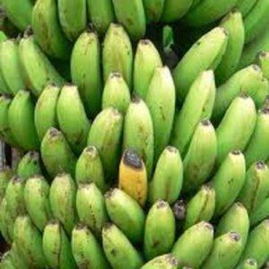 Banana Plant Fhia 17 Musa Banana Tree Florida Hill Nursery